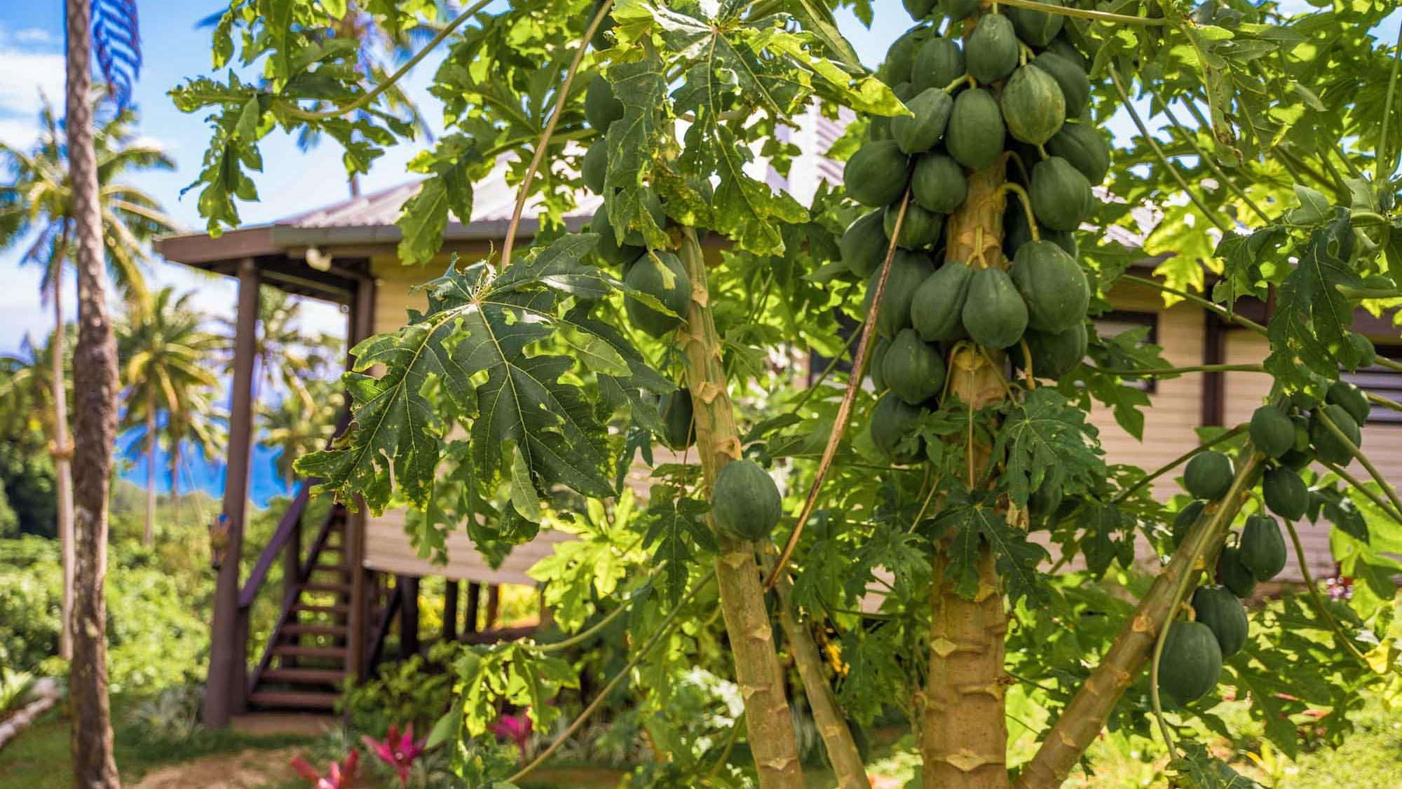 Plenty of fruit for picking